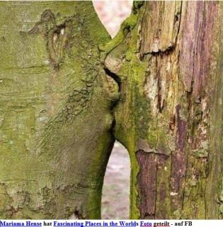 Baumkuß