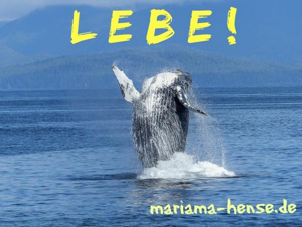 humpback-whale-431902_1280