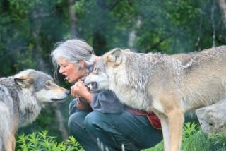 wolf-885026_1280