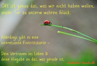 glueck-2