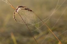 cobweb-1576299__340